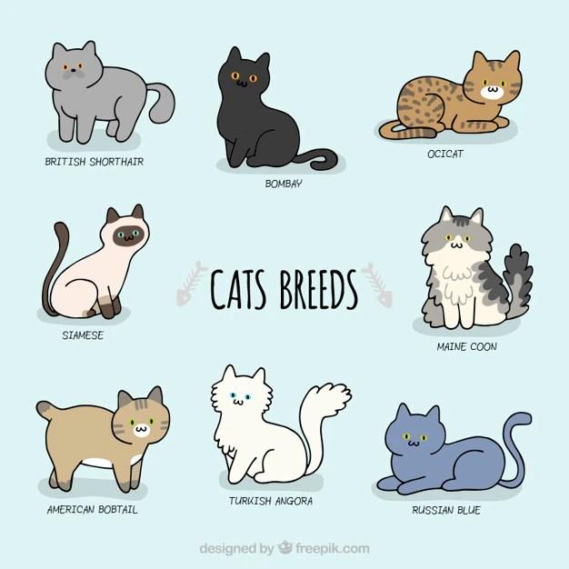 sketchy cute cat breeds