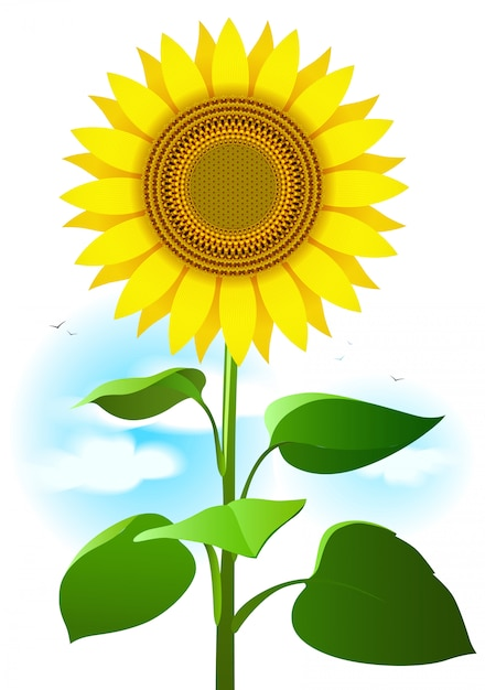 Sunflower Cartoon Drawing : sunflower, cartoon, drawing, Premium, Vector, Sunflower, Illustration., Cartoon, Drawing, Flower,, Leaves, Clouds.