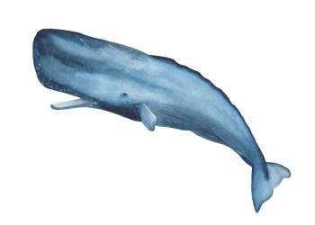 Premium Vector Watercolor blue sperm whale clipart