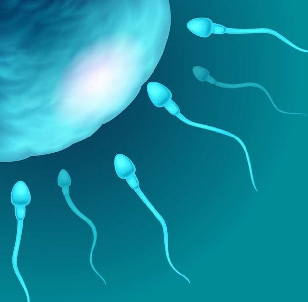 Ilustração de fecundação. Corrimento rosado sintoma de gravidez