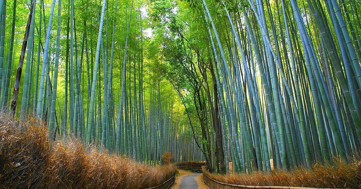 圧巻の竹林!京都・嵐山観光を120%満喫するおすすめの楽しみ ...