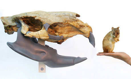 The fossil skull, with a modern rat for comparison
