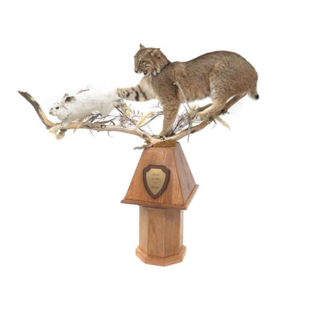 hight resolution of lot 61 maine bobcat hare full body trophy mount with oak