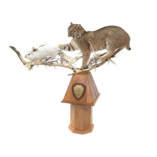 small resolution of lot 61 maine bobcat hare full body trophy mount with oak