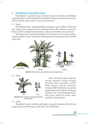 Tanaman Yang Berkembang Biak Dengan Tunas : tanaman, berkembang, dengan, tunas, Kelas04_ipa_yayat-sri-lilis, Selagan, Issuu