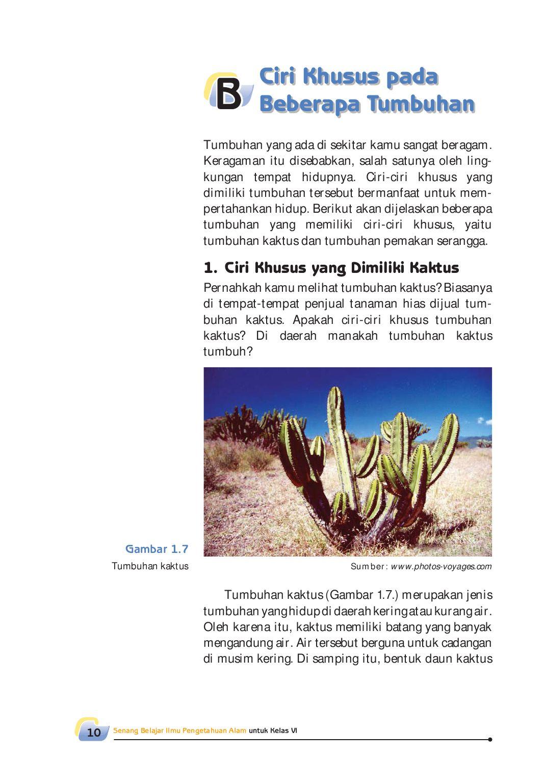 Ciri Khusus Kaktus : khusus, kaktus, Kelas06_senang-belajar-ipa_siti, Selagan, Issuu