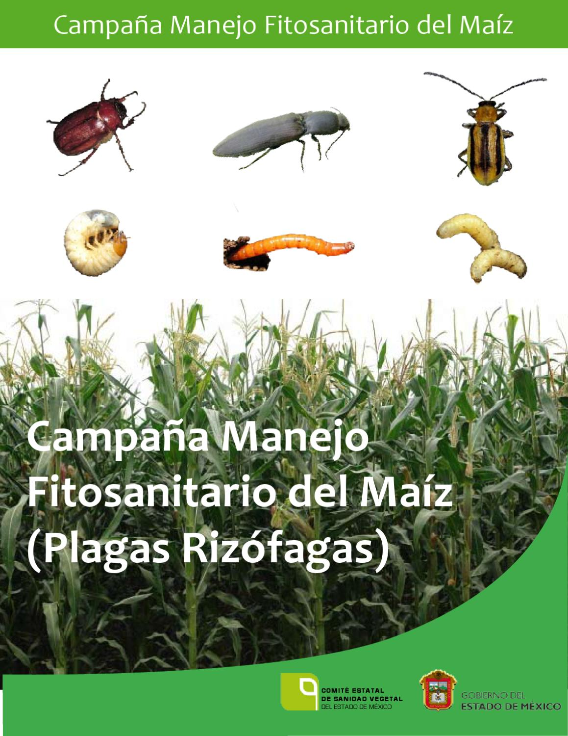 Plagas Rizofagas By Miguel Angel Issuu