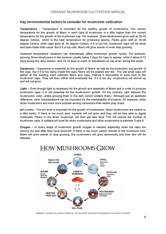 hight resolution of key of a mushroom diagram