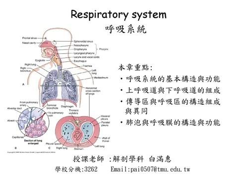 20130429respiratory system by lin yizhen - Issuu