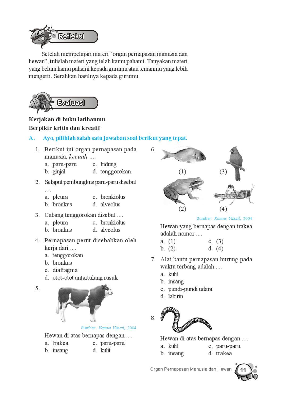 Cabang Tenggorokan Disebut : cabang, tenggorokan, disebut, Kelas, Mengenal, Sekitar, Pengetahuan, Tarwoko, Herawati, Issuu