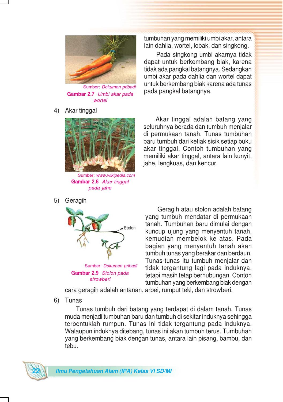 Cara Berkembang Biak Wortel : berkembang, wortel, Kelas, Pengetahuan, Sulistyanto, Herawati, Issuu