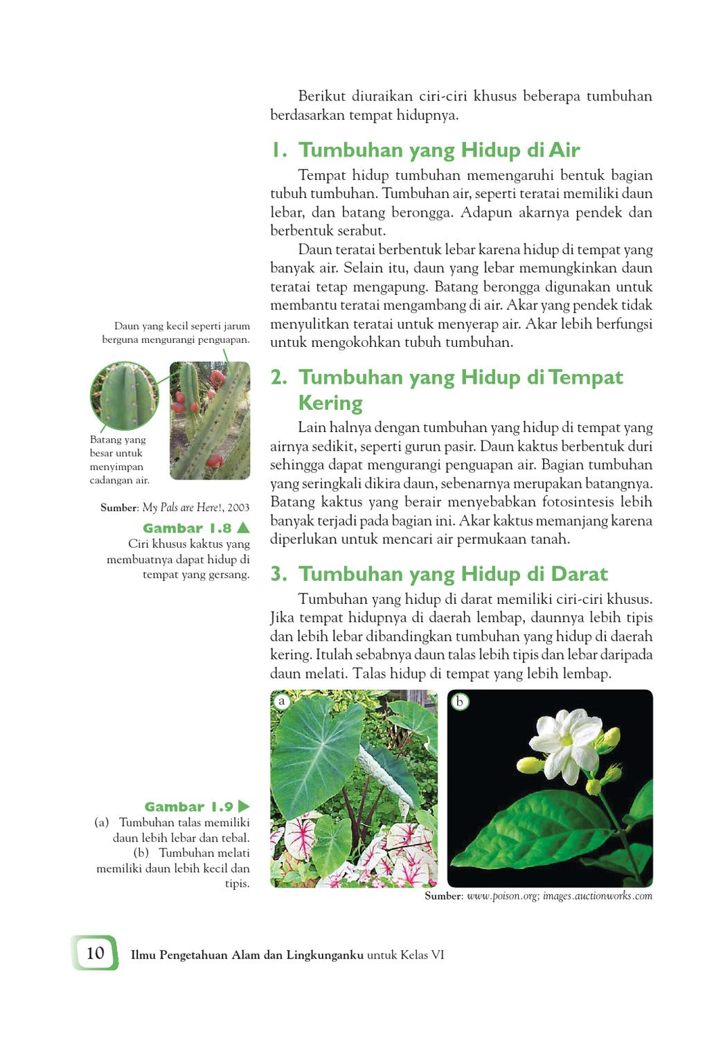 Daun Daun Pada Kaktus Berbentuk : kaktus, berbentuk, Kelas, Pengetahuan, Mulyati, Arifin, Herawati, Issuu