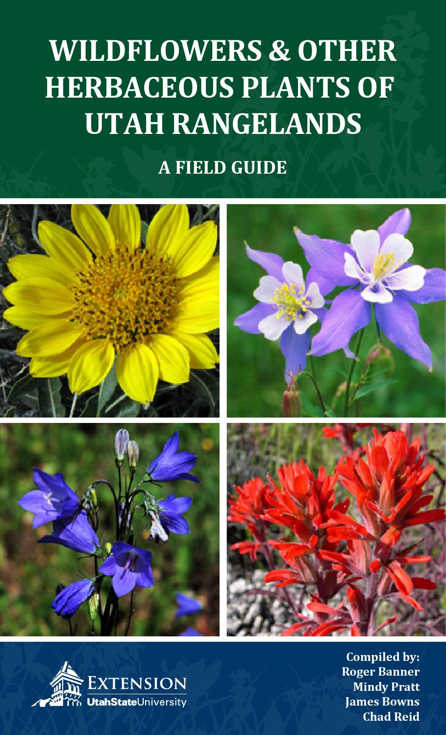 Wildflowers and Other Herbaceous Plants of Utah Rangelands