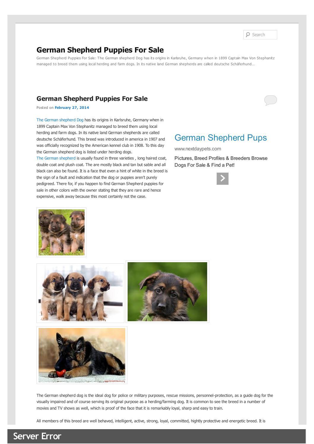 Max Movie Dog Breed : movie, breed, Newgermanshepherdpuppiesforsale, Christiana, Romero, Issuu