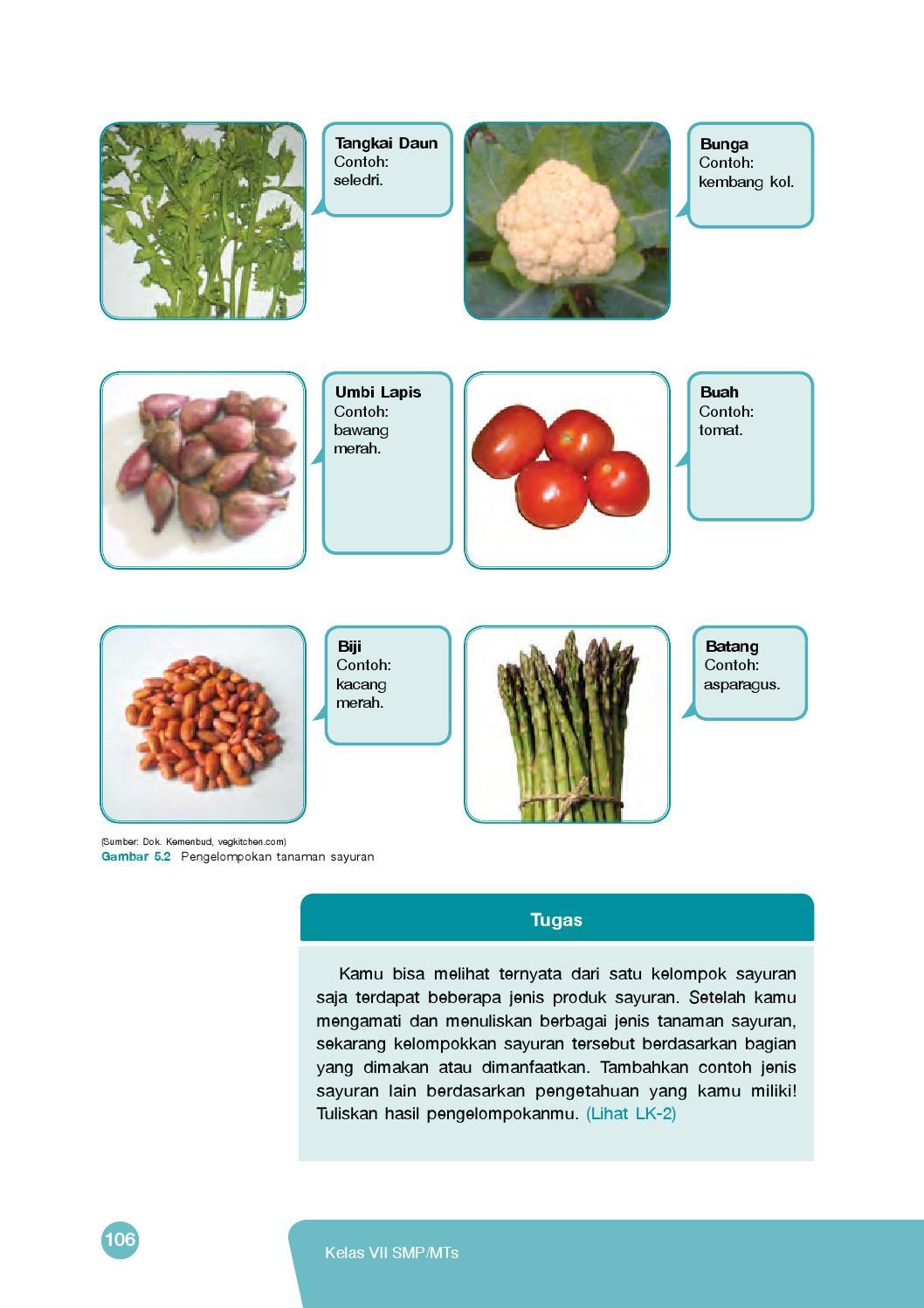 Contoh Tanaman Sayuran Daun : contoh, tanaman, sayuran, Kelas, Prakarya, Siswa, Madrasah, Tsanawiyah, Mandalahurip, Issuu