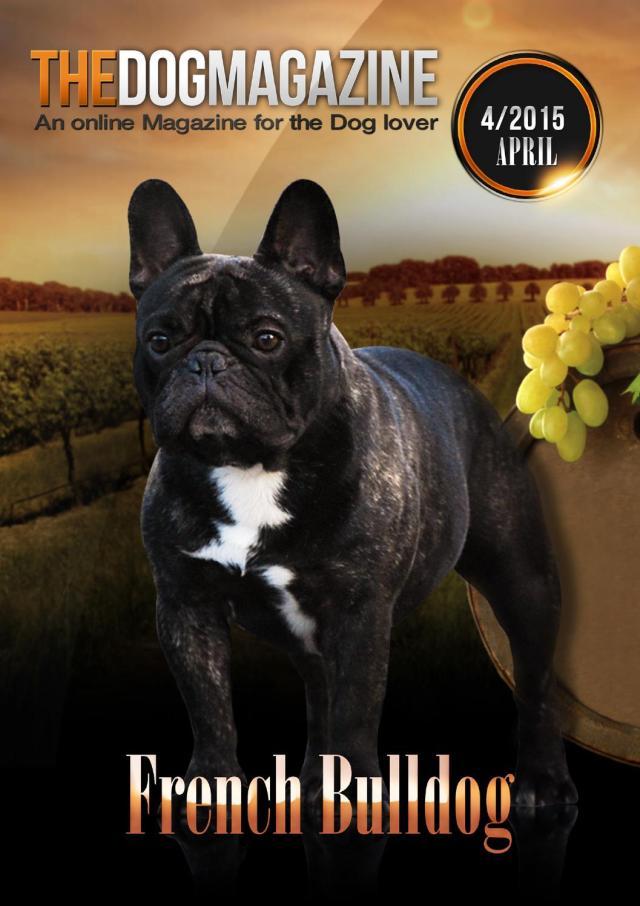 the dog magazine - issue 04/2015 french bulldog by