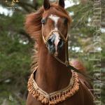 Arabian Horse Times Vol47 No2 Issue 7 By Arabian Horse Times Issuu