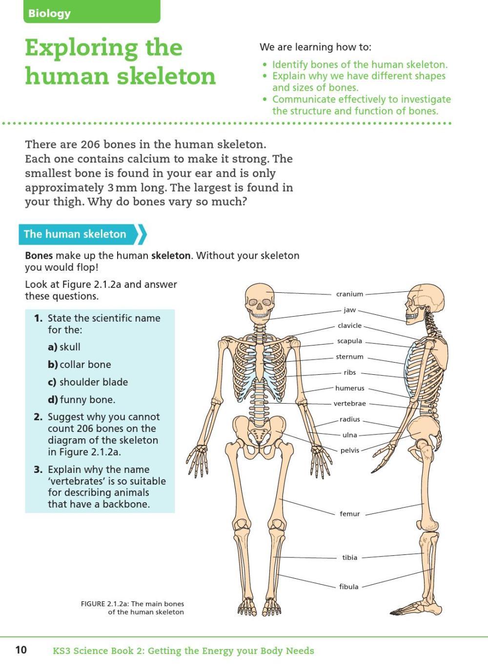 medium resolution of key stage three science student book 2
