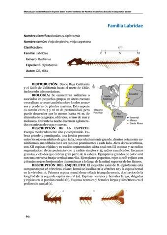 Manual para la identificación de peces óseos marino