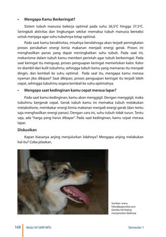 Anjing Menjulurkan Lidah : anjing, menjulurkan, lidah, Kelas, Pengetahuan, Siswa, Issuu