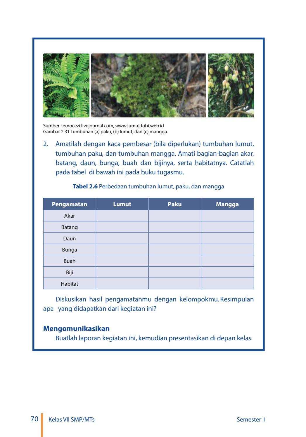 Tabel 2.6 Perbedaan Tumbuhan Lumut Paku Dan Mangga : tabel, perbedaan, tumbuhan, lumut, mangga, Kelas, Pengetahuan, Siswa, Issuu