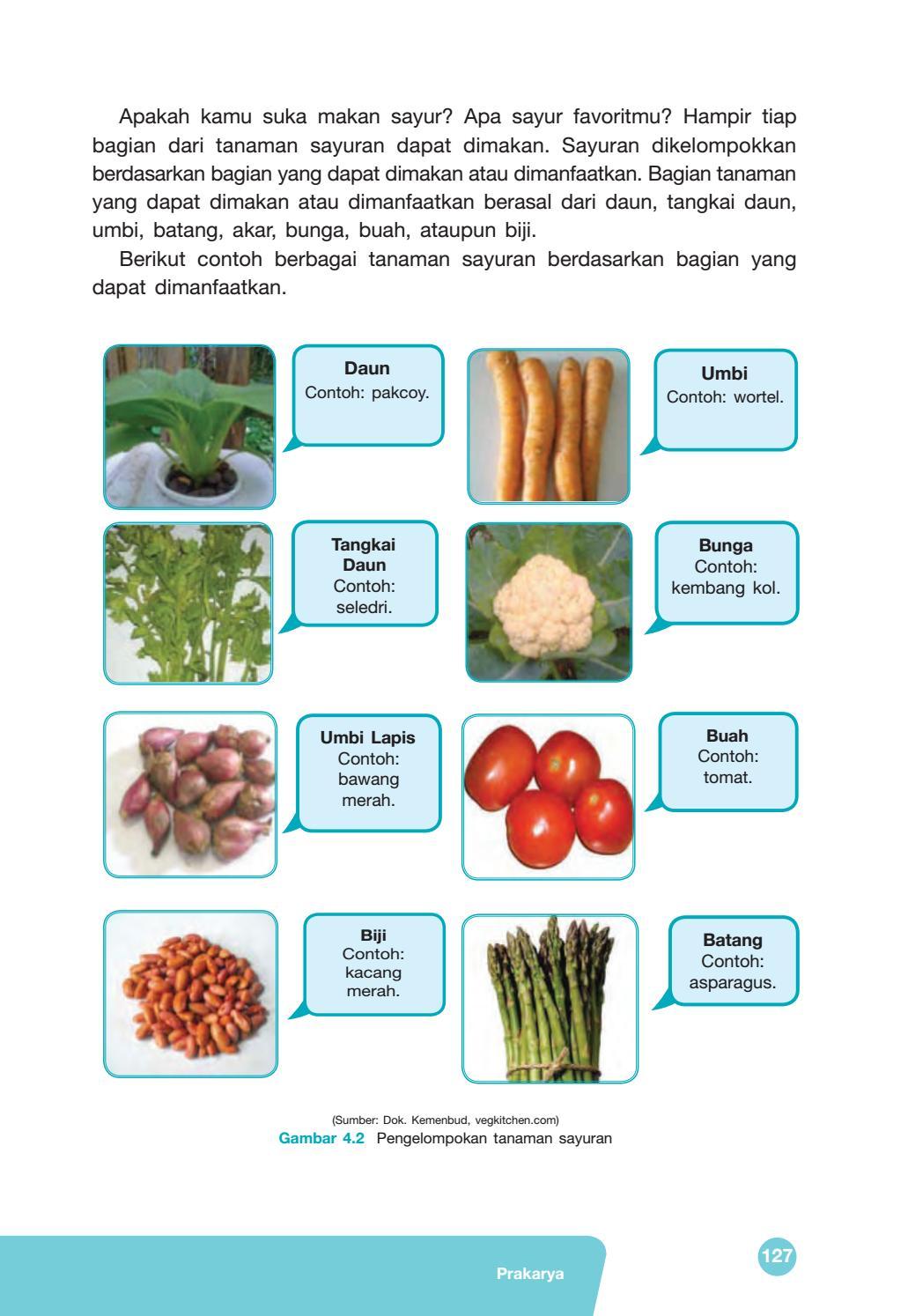 Sayuran Yang Berasal Dari Bunga : sayuran, berasal, bunga, Kelas, Prakarya, Siswa, Issuu