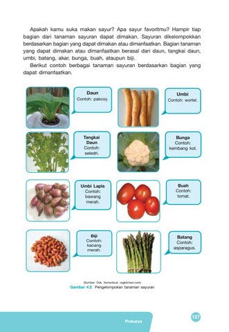 Contoh Tanaman Sayuran Daun : contoh, tanaman, sayuran, Kelas, Prakarya, Siswa, Issuu