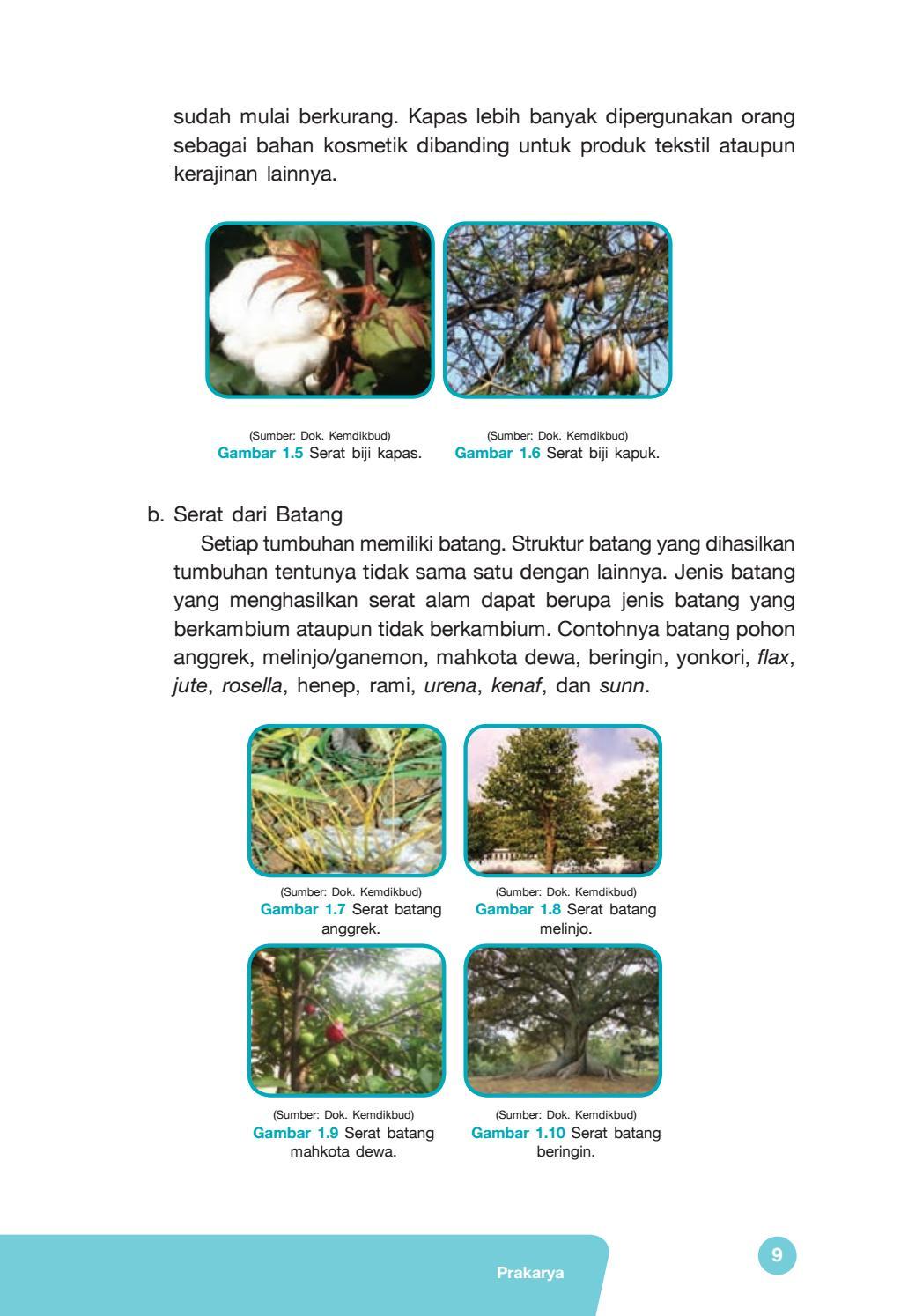 4 Jenis Serat dari Tumbuhan Beserta Contoh dan Manfaatnya