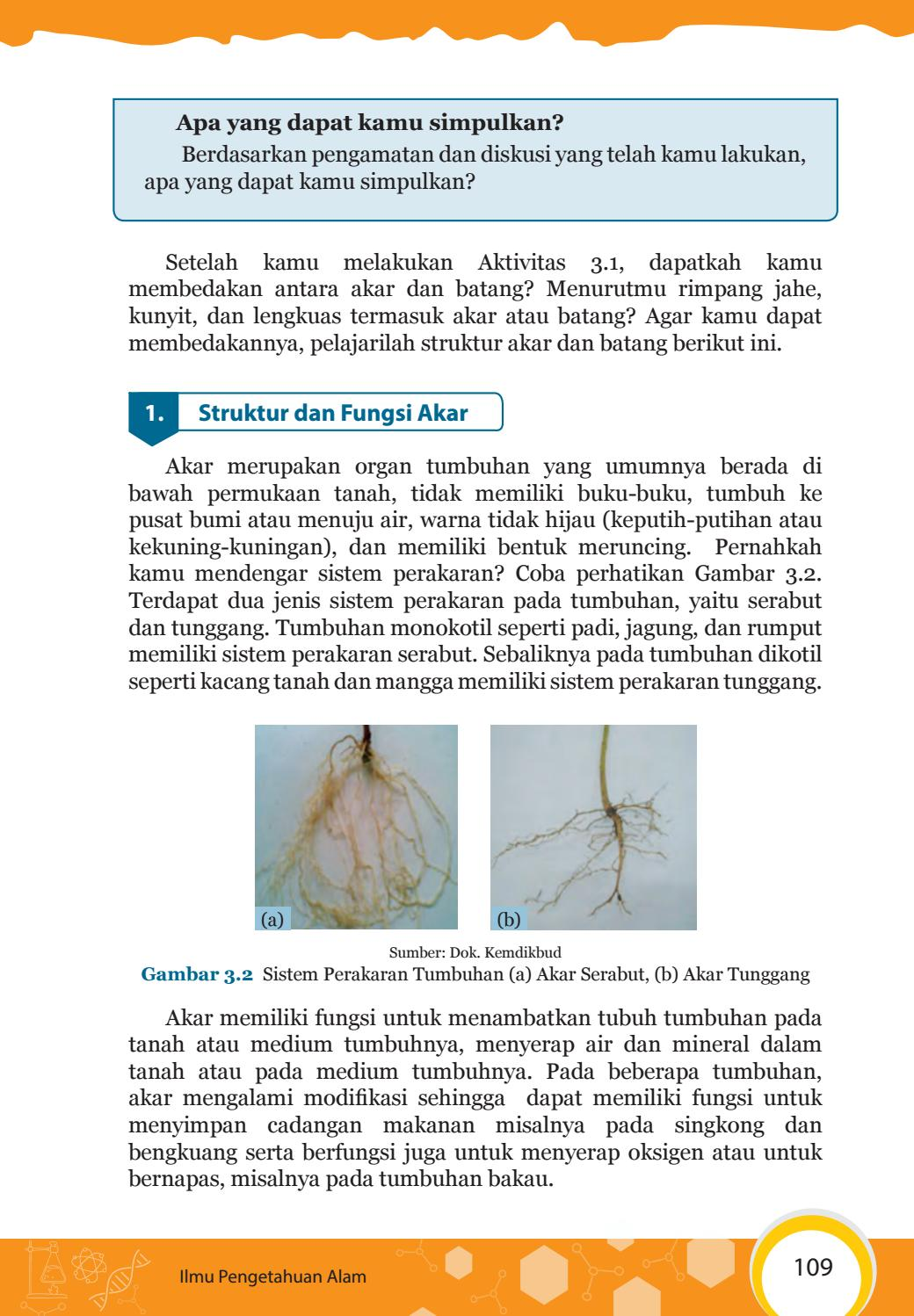 Aktivitas 3.1 Mengidentifikasi Organ Penyusun Tumbuhan Beserta Fungsinya : aktivitas, mengidentifikasi, organ, penyusun, tumbuhan, beserta, fungsinya, Mengalami, Modifikasi, Struktur, Fungsinya, Berbagai