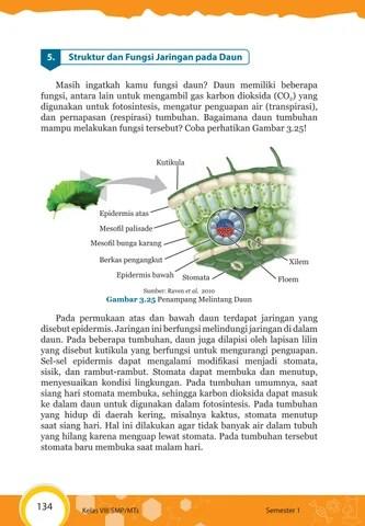 Fungsi Daun Tumbuhan : fungsi, tumbuhan, Kelas, Pengetahuan, Siswa, Issuu