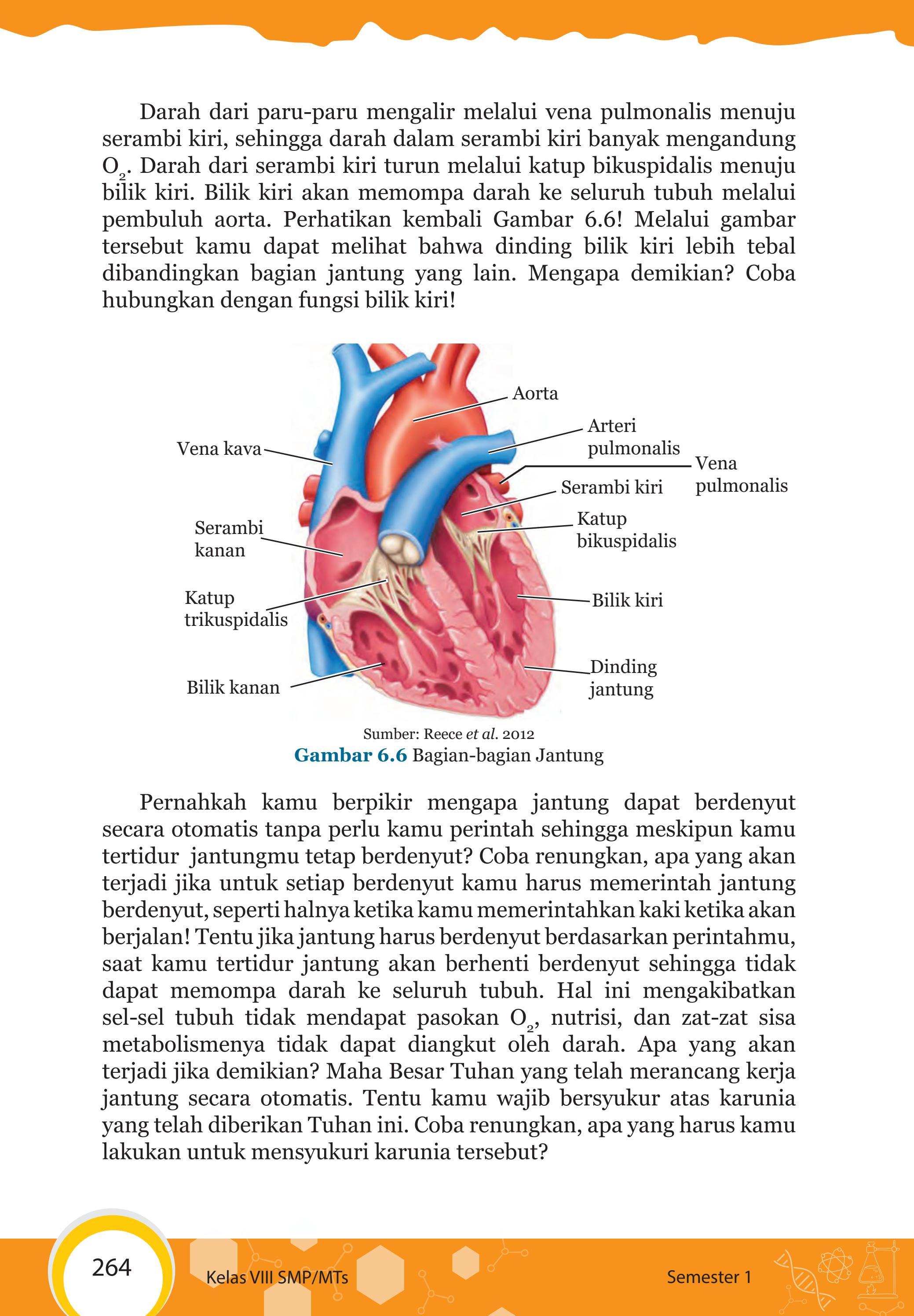 Gambar Bagian Jantung Dan Fungsinya : gambar, bagian, jantung, fungsinya, Kelas, Pengetahuan, Siswa, Issuu