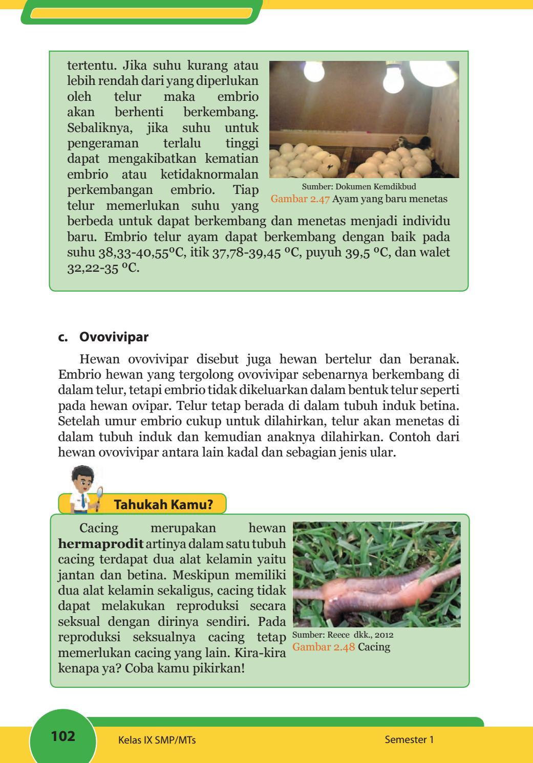 Sebutkan Hewan Ovovivipar : sebutkan, hewan, ovovivipar, Contoh, Hewan, Ovovivipar, Ovipar, Materi, Pelajaran