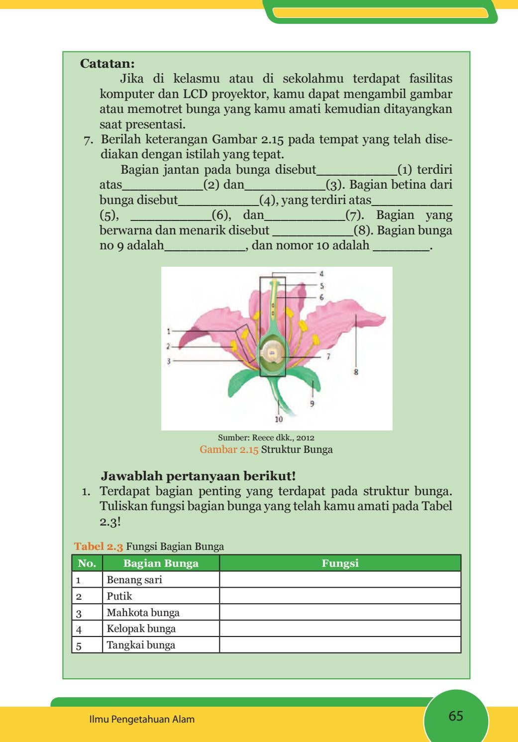 Struktur Bagian Bunga : struktur, bagian, bunga, Kelas, Pengetahuan, Siswa, Issuu