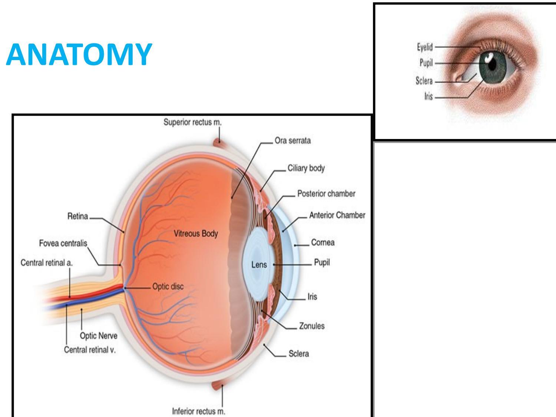hight resolution of anatomy of the eye human eye anatomy aakash eye hospital
