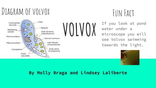 small resolution of volvox diagram