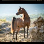 Arabian Horse Magazine N3 2018 Aachen Issue By Arabian Horse Magazine Issuu