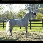 Arabian Horse Magazine N2 2020 By Arabian Horse Magazine Issuu