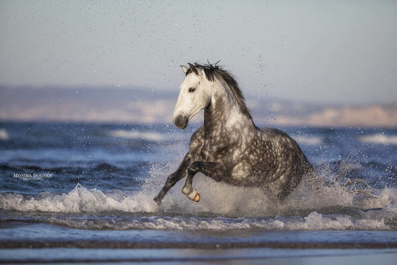 Pferde in der Natur  Monika Bogner Photography