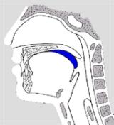 phase de transport orale