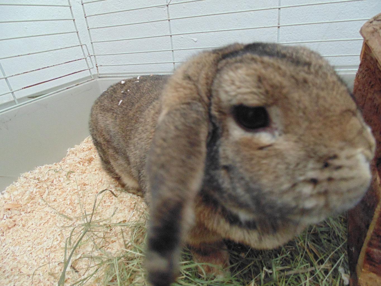Typische Krankheiten bei Kaninchen - tsv-krems Webseite!