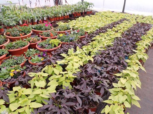Es Grünt So Grün, Wenn Unsere Blüten Blühn!  Gartenbau