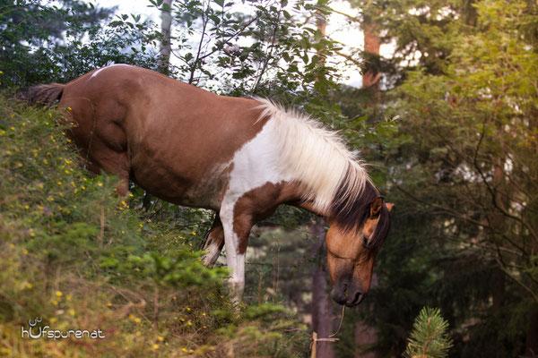 Die Hufspuren PferdefotoshootingGewinner Das wilde
