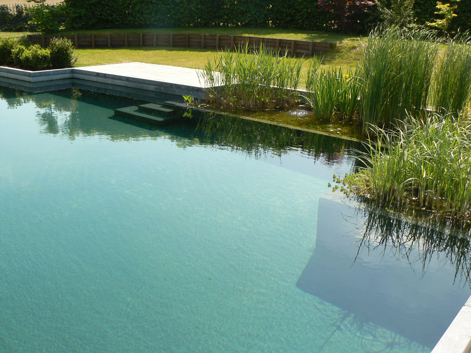 Piscine naturelle plan deau et lagunage  Water Garden
