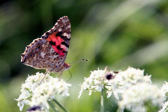 Schmetterlinge  Wnsch dir was  MAKE MY DAY  Das