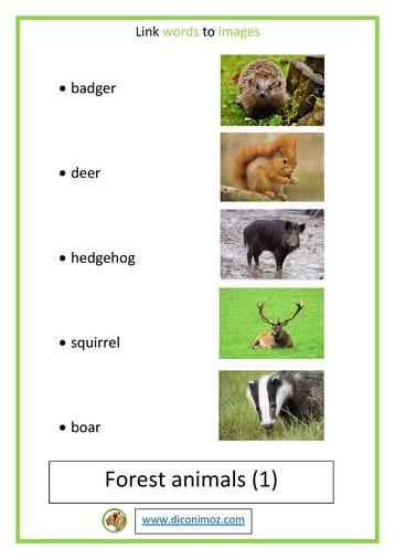 Animal Qui Commence Par U : animal, commence, LISTE, ANIMAUX, ANGLAIS, Diconimoz