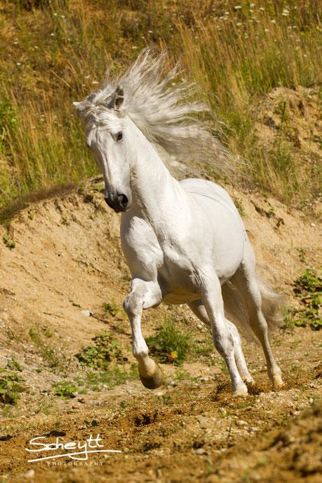 Pferdefotografie Fotos des Kiesgrubenshootings