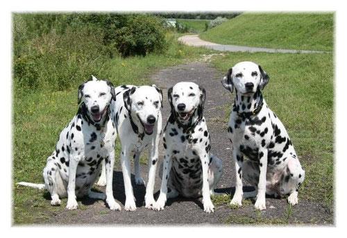 Unsere Hunde Dalmatiner Vom Wirbelwinds Webseite