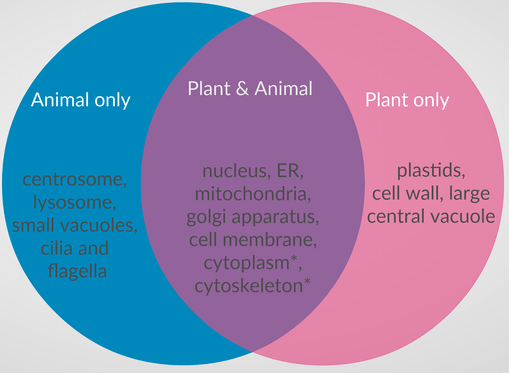 plant cell animal venn diagram flasher unit wiring differences and similarities between cells withcarbon a showing an