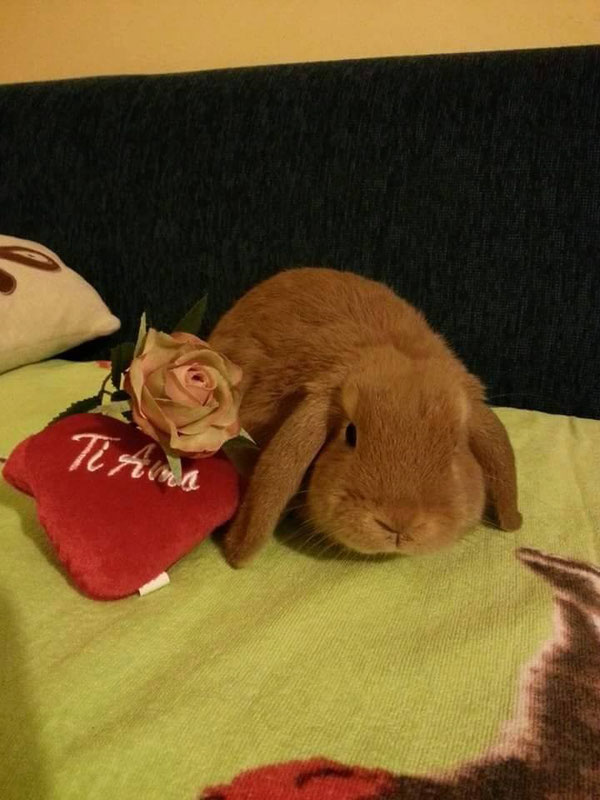 Foto cuccioli adottati Pag 3  CASA FABRI Allevamento e vendita conigli ariete nano e nani