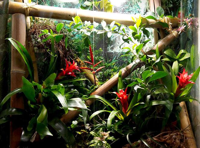 Terrarienpflanzen Pflanzenvitrinen Terrarien  FlowerCompany